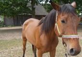 Utwór Konie – Maryla Rodowicz
